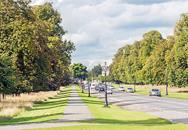 Cars can be seen on a road in Dublin's Phoenix Park
